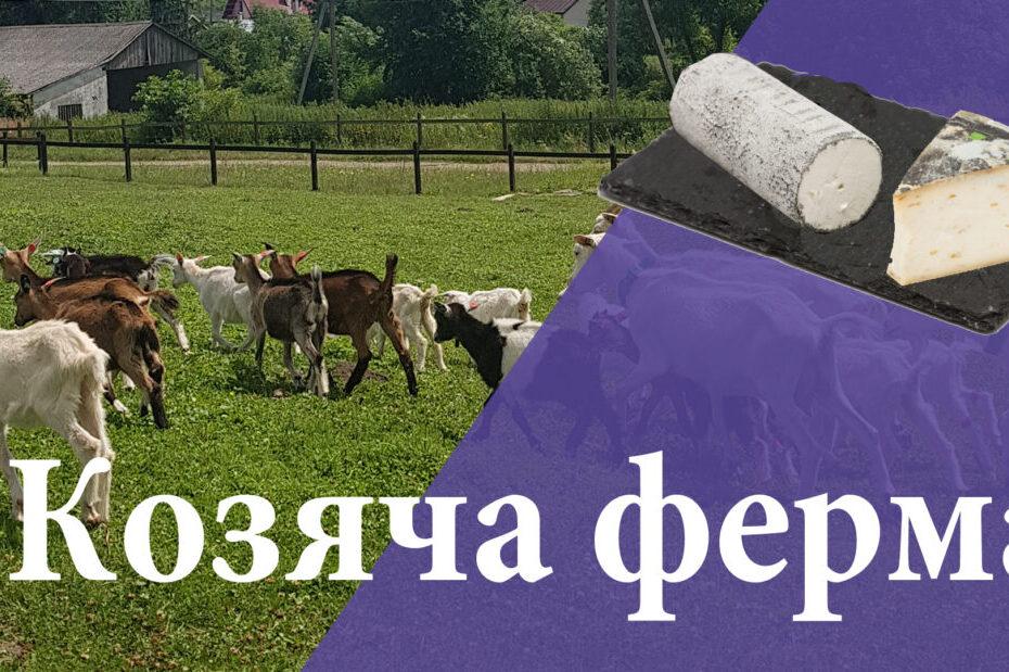Козяча ферма Шеврет та дегустація французьких сирів